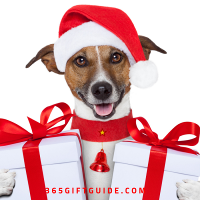 Best Christmas Dog Gifts for Your Fancy Pooch