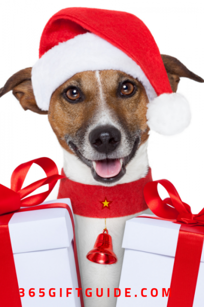 Christmas Gifts for Your Fancy Pooch