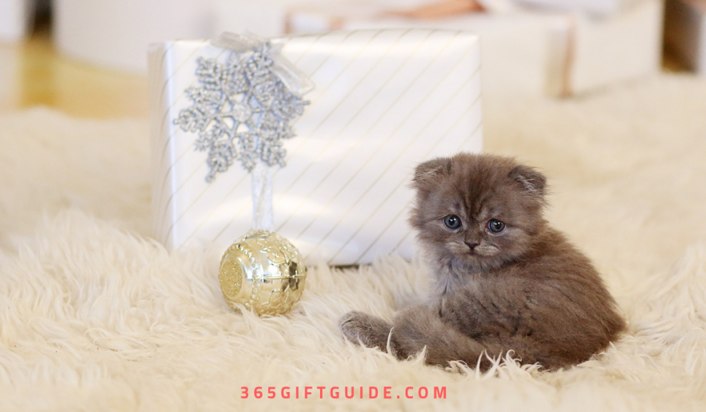 what should i get my cat for christmas