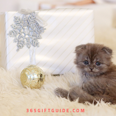 21 Christmas Gifts for Your Fancy Feline – Best Cat Gifts