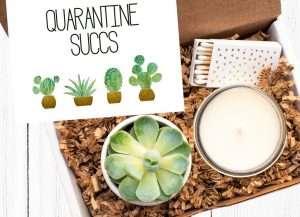 Quarantine Succs Gift Basket