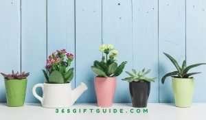 Best Succulent Gift Box Ideas