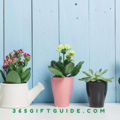 21 Best Succulent Gift Box Ideas