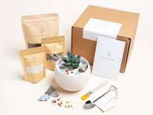 DIY Succulent Gift Box