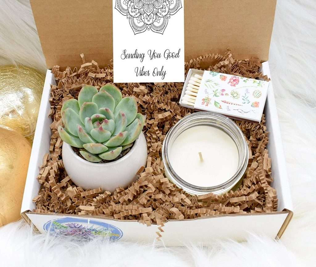 Good Vibes Succulent Gift Box