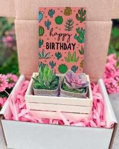 Happy Birthday Succulent Gift Box