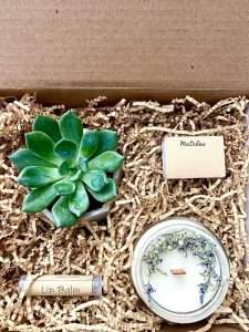 Spa Succulent Gift Box