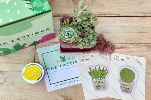 The Cactique Succulent Subscription Box