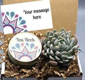 You Rock Succulent Gift Box