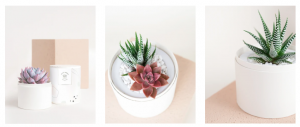 Succulent Gifting for Father's Day