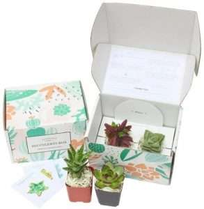 Succulent Subscription Box for Dad